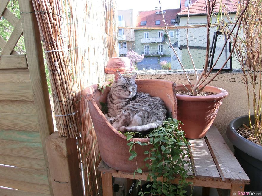 猫奴最新战帖:「你能在这张照片里找到我吗?」找得到你就是神人啦~