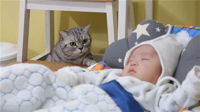 5只喵星人第一次看见软绵绵的小婴儿…「经典反应样子」让我笑到眼泪流!