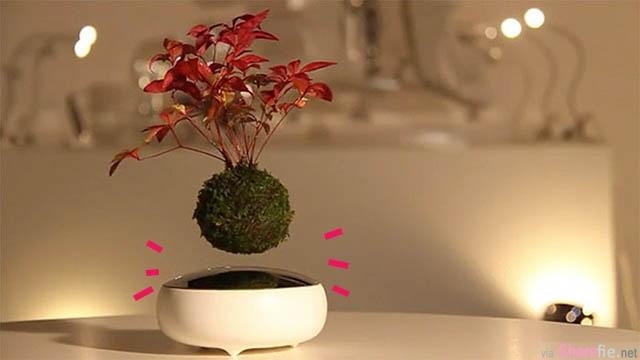 日本空中盆栽 让盆栽旋转悬浮在空中