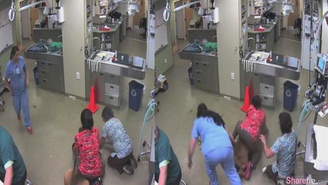 这只怕看医生的狗狗看到兽医后 下一秒发生的事让网友笑到喷饭!