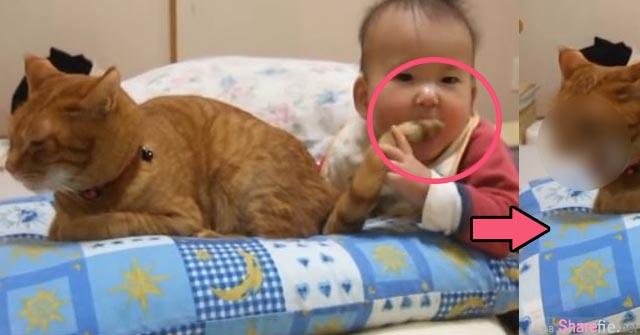 宝宝看到摆动的猫尾巴竟然一口咬下去 猫咪的反应是.....