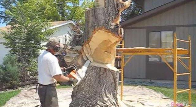原本枯死的树桩看来只能除掉,但他拿了电锯出来,做出的成品让旁边的邻居都嫉妒死了