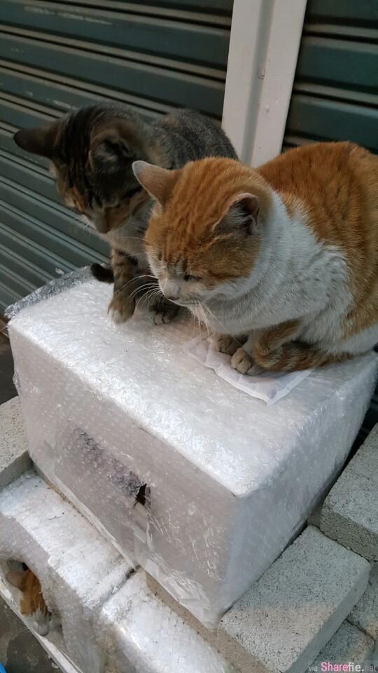 人类给了这只猫咪一个暖暖包,没想到猫咪的反应是这样...太可爱了!