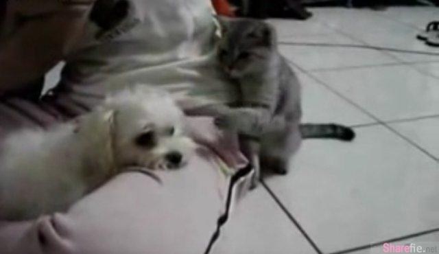 这只猫咪被称作「史上最欠揍猫咪」