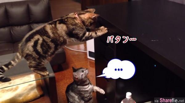 这四只笨猫咪偷偷撬开抽屉,还不知主人已在身后....