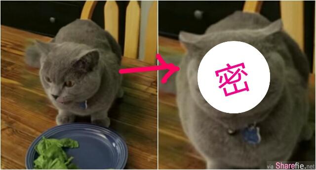 这只猫咪偷吃被发现 它做了一个超有戏的眼珠表情 更爆笑的是最后的那个动作