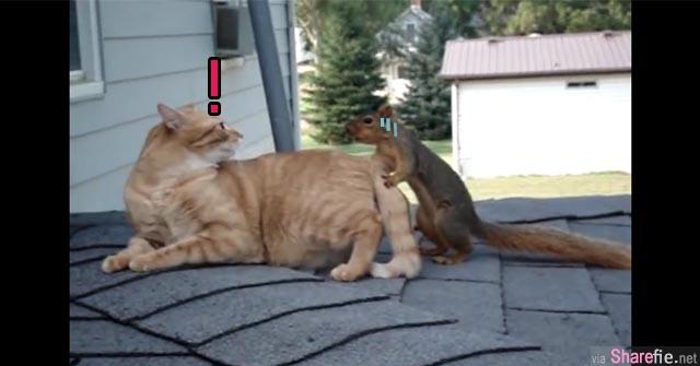 猫咪在休息时 一只松鼠跑了过来 下一秒的画面竟然是这样
