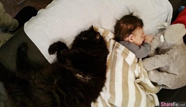 跨越肚皮的友情!这只灵猫竟然喜欢聆听胎动 小主人出生后还抢着当奶妈