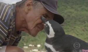 超感人!人企情未了,这只企鹅每年都要游8千公里来报恩
