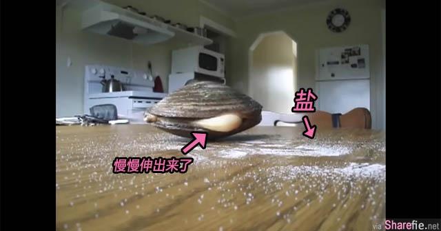 他在蛤蜊四周撒盐 下一秒竟然拍到异形电影里的恐怖画面