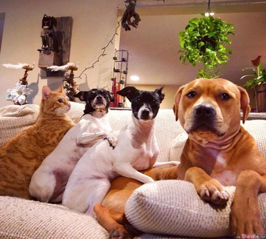 这对夫妻养了7只动物 看他们全家福的可爱合照会让你心情好一整天