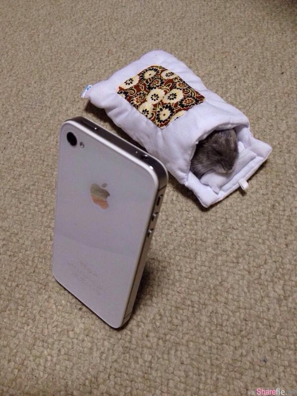 20只小仓鼠被拍到的超可爱表情动作  看到第一只已默默的被融化了