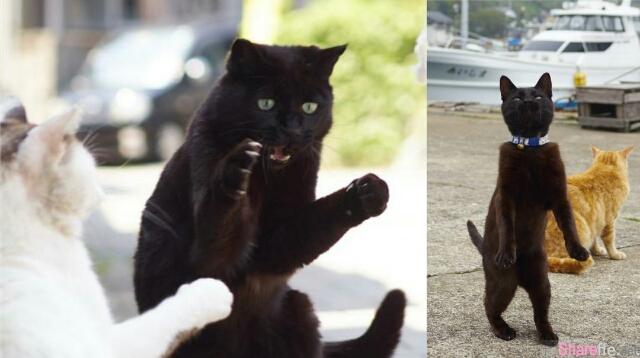 """他说黑猫很难拍?要拍""""动起来""""的才够帅,结果惨拍成怪大叔"""