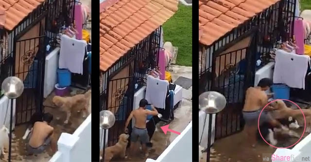 新加坡疯传冷血男对狗狗拳打脚踢  网友:这人是疯了吗?没爱心就不要养狗