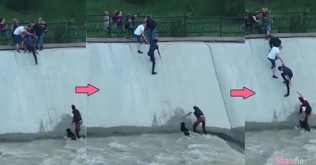 这群陌生人手牵着手冒着被大水冲走的危险 勇敢的拯救被困在急流上的狗狗