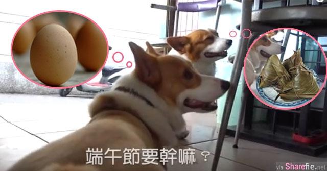 主人发现这只狗狗竟然懂得端午节的拿手绝活 当镜头慢慢向下移动 所有网友立刻笑喷了