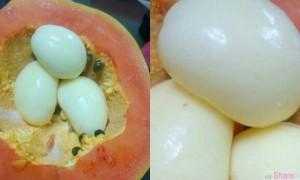 木瓜中长出水煮蛋?这名网友的专业解答让人瞬间长知识