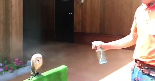 饲育员为了帮助小猫头鹰降温朝它身上喷水,结果牠的「反应」让网友也跟着一起做