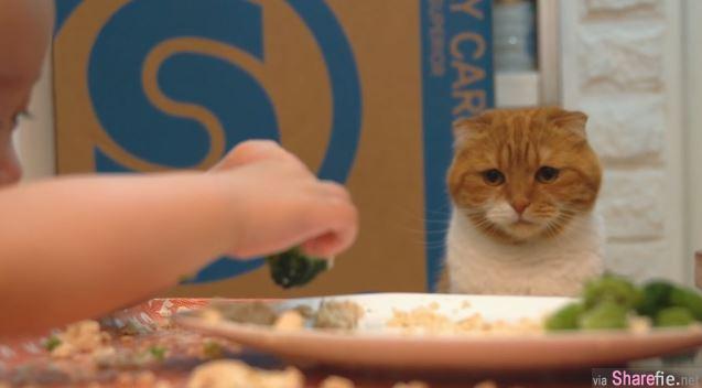 这只喵星人望着小主人的食物 一脸哀怨的可怜样让网友恨不得立马送上一只烧烤秋刀鱼