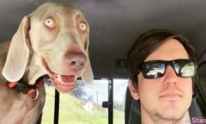 这只狗狗爬山前&爬山后的对比照 笑翻网友