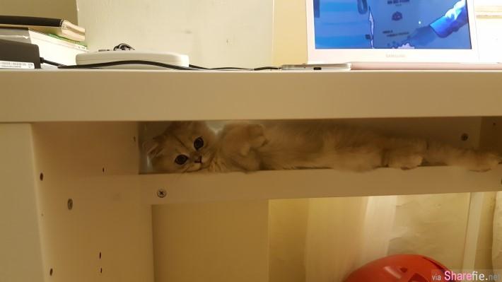书桌上的小洞洞有什么功用? 当他站起来往下看差点被萌死