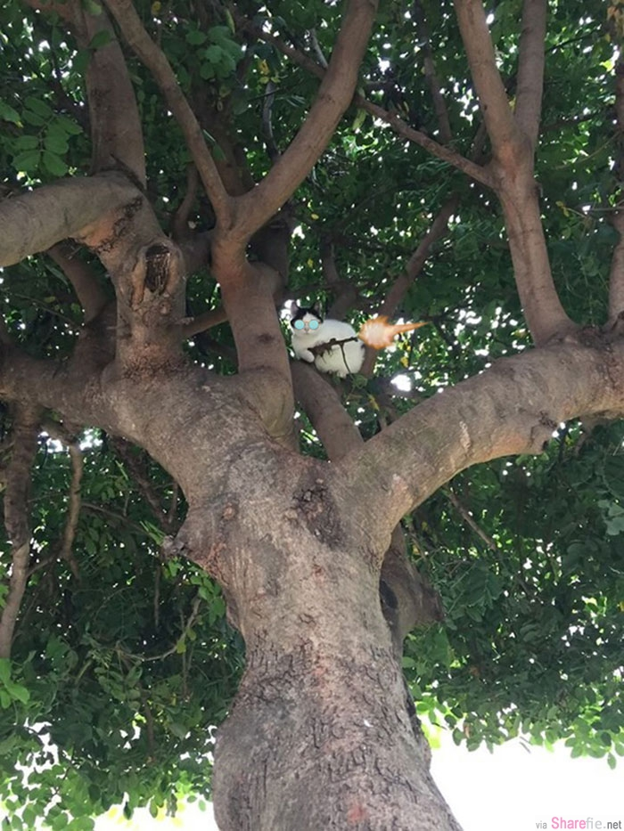 霸气狙击手!这只肥白猫在树上被发现非法持械 但仔细一看 原来是...