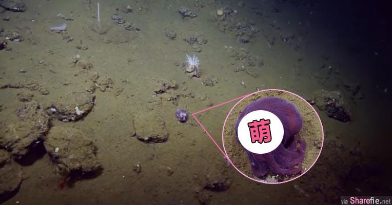 科学家在深海发现「紫色小精灵」镜头放大一看 它竟然瞪大眼睛把网友都萌翻了