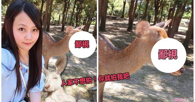 台湾妹子到日本奈良与小鹿自拍却惨遭鄙视,结果照片po网后竟然爆红到国外