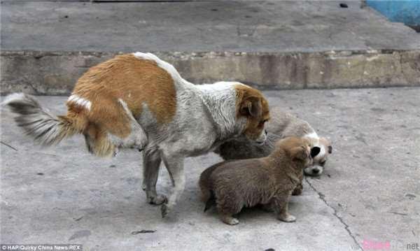 这只剩下两条腿的狗狗从垃圾桶找食物却没有马上吃掉,一路跟踪才发现感人的一幕…