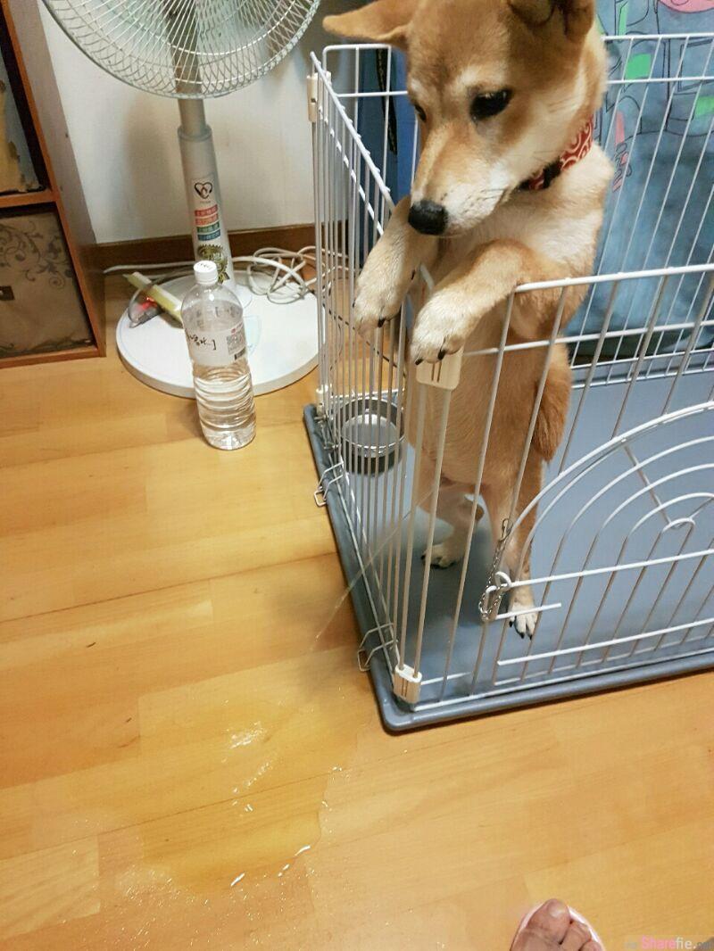怎么会有水声? 当他发现事情不对路已太迟了 事后狗狗露出得逞的模样根本就是事先计划好的