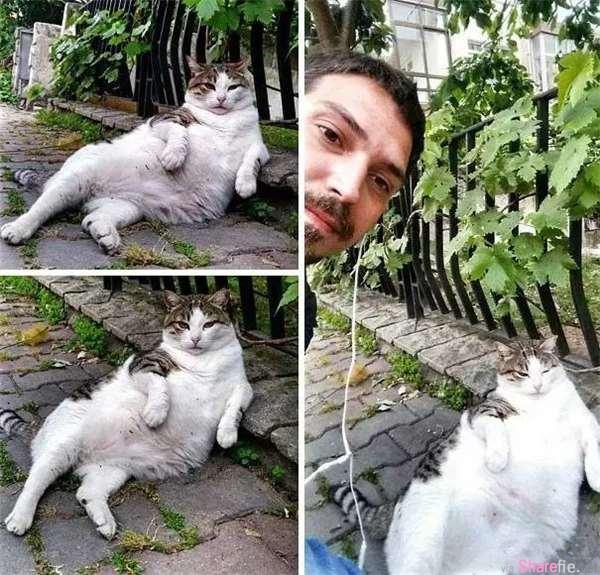 这只网络爆红的慵懒肥猫过世了,不捨猫奴在原地设立雕像…看到猫像网友:一点都不像