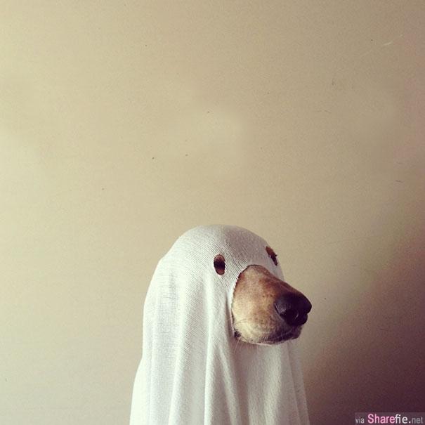 27张主人把狗狗打扮成超不像狗让人看了又恐怖又爆笑的万圣节造型