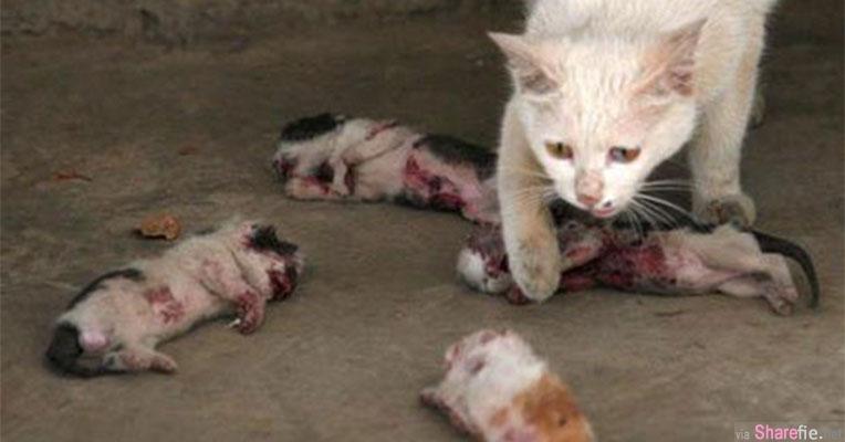残忍虐猫! 凶手用玩具枪射伤小猫甚至开膛剖肚虐待致死 猫妈妈看着眼前的景象.....让人好心痛