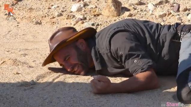 这名不怕死的男主持 竟然想挑战被「世界最勐沙漠毒蜂」螫一下,被螫后立刻倒地…