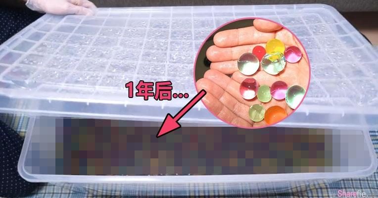 这名日本人气youtuber把「1年前的一万颗水晶宝宝」释放出来 还以为会发臭但结果让人惊奇