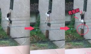 这名正妹把砖头垫起来试着想爬到二楼,当正要爬进窗口 突然下一秒.....网友:多么痛的领悟