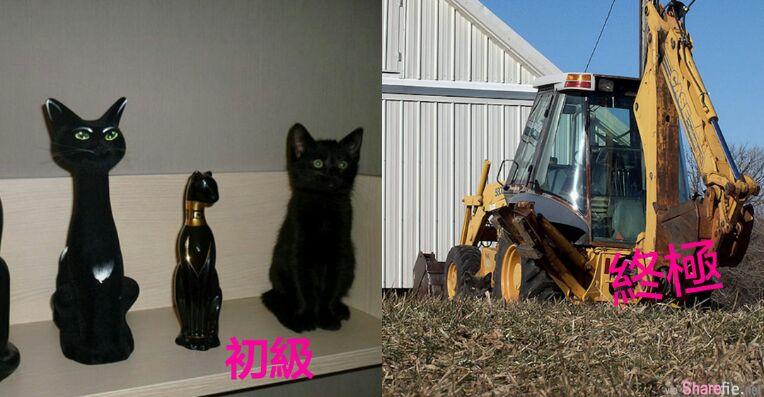 大家来找碴!17张终极寻找猫咪眼力大考验 找到差点崩溃