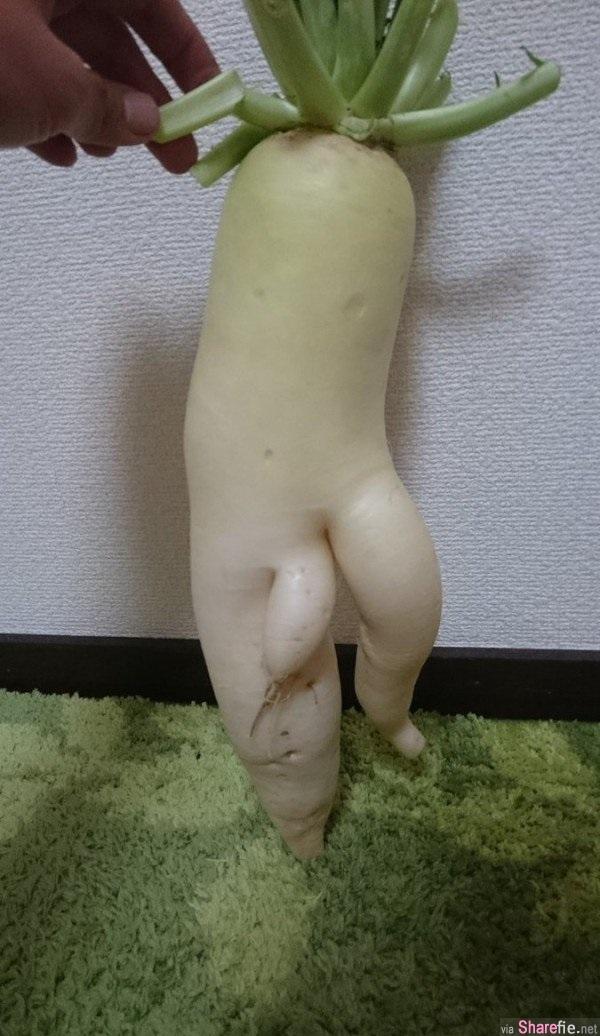 「家里的萝蔔下流了」该怎么处置? 女网友看完后立马传给了男友