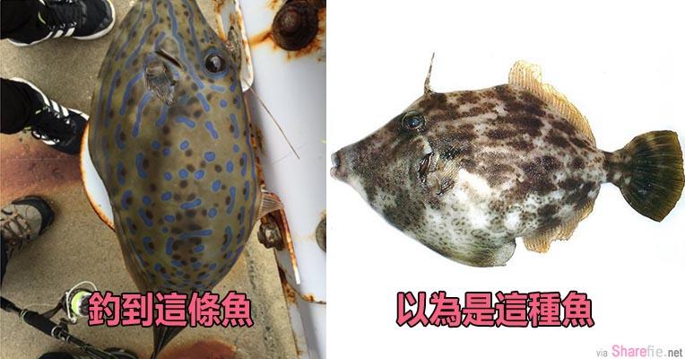这名日本网友钓到一条大鱼想要弄生鱼片  没想到他让「手机先吃」竟然救了自己一命