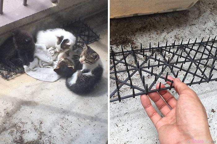 日本主人放了长满刺刺的驱猫垫,以为猫咪被戳死 没想到走近一看画面让人笑喷