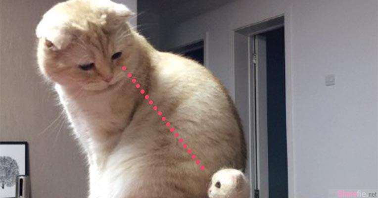 正妹家里猫咪突然发现身边有股熟悉的味道 转过头后露出一脸疑惑的表情让网友笑喷了