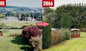 这名70岁小气欧巴桑在自家门口种了「这种树」,20年后邻居才发现这是她处心积虑的復仇大计