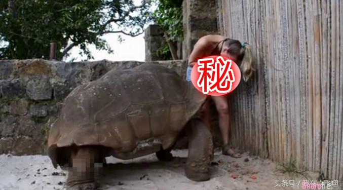 女子给乌龟喂食,乌龟接下来的动作却令人害羞