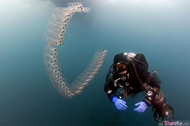 15个奇特的透明生物,体内的器官一览无余