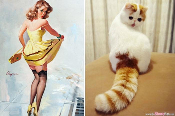 24张87分不能再高的猫咪神模仿