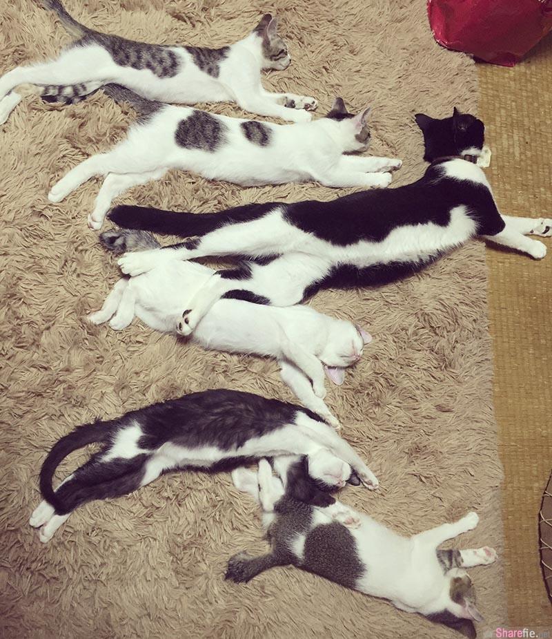 日本网友回家一打开门就惊见疑似兇杀案现场「9只猫咪集体瘫痪的躺在地毯上」调查结果显示..