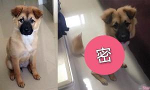 老外带爱犬去「理髮」中国店员听不懂 结果回来领狗整个人都呆了