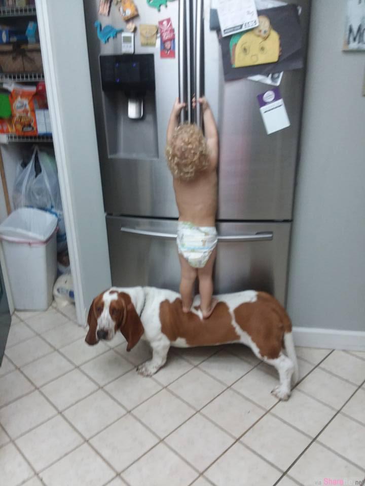 小主人与狗狗一起合作打开冰箱,正当快要成功的时候, 狗狗竟然做出致命的背叛