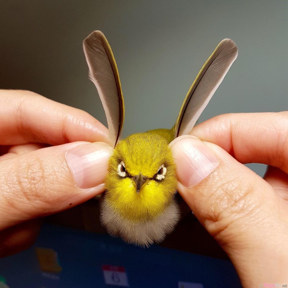 他用两根棉花棒帮小鸟按摩 太舒服最后小鸟竟然...