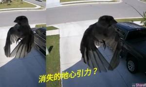 这只小鸟不拍翅膀竟然还能悬浮空中,监视器录下诡异画面